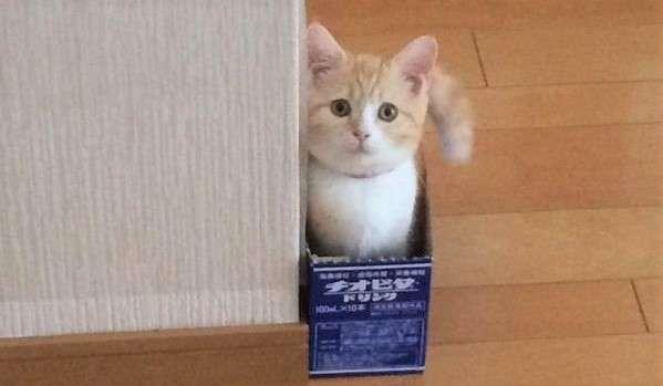 【ここがお気に入りにゃ♡】ピッタリサイズの箱を、気に入った子猫ちゃん!…ちょこんッ♡(3枚)