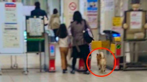 【ほっこり事件簿♡】無賃乗車をこころみた柴犬、あえなく現行犯逮捕される…(゚A゚;) 4枚