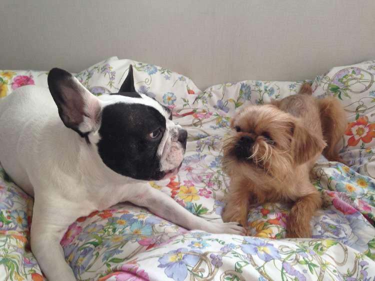 犬同士は仲良くなるの?ならないの?【カバヲ&へこべえ 多頭飼い日記 #2】
