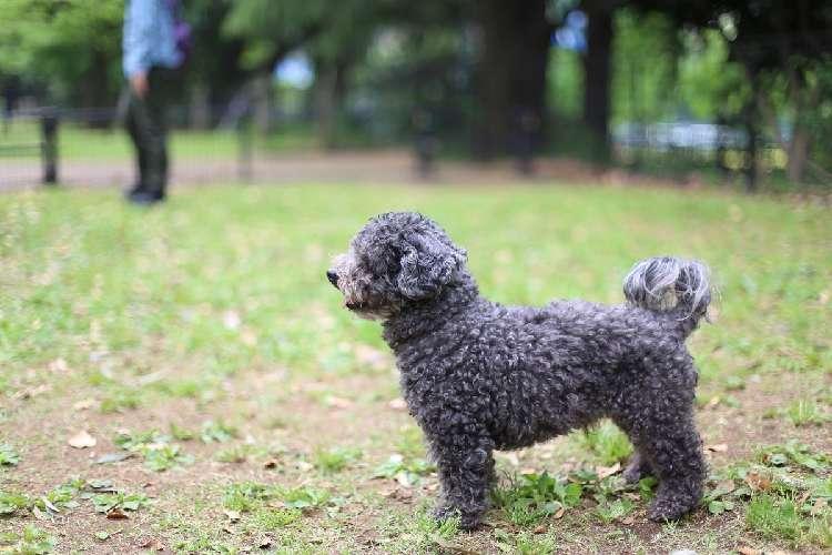 保護犬と子ども【ぼくの人生を変えた保護犬「ウディ」のこと #6】