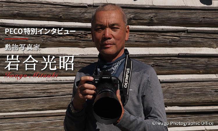 """大切なのは""""光""""と""""まるみ""""ーー。岩合光昭さんに伺った、猫を上手に撮影する秘訣とは【後編】"""