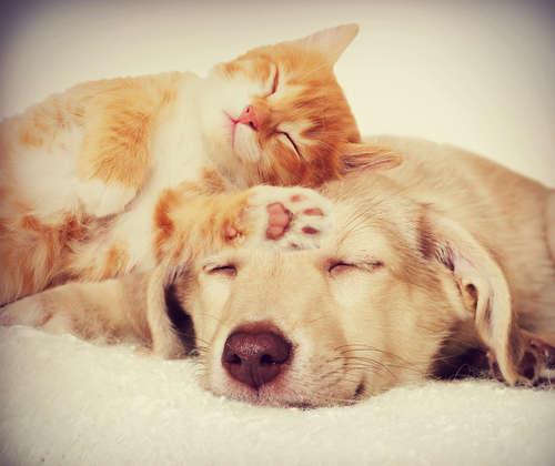 ペットに「キュン♡」とする瞬間を大募集♪  ペットの魅力を投稿しよう♡