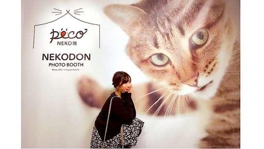【イベントレポート・前半】吉祥寺PARCOで開催中の「PECO NEKO館」最新情報まとめ