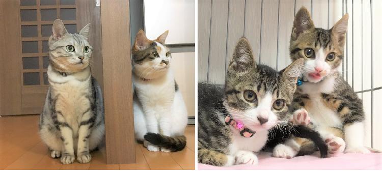 """保護された子猫に """"警戒の視線""""を送っていた猫たち。しかし6日目、先住猫のとった行動に心温まる♡"""
