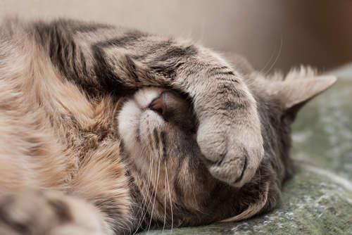 猫も狂犬病になる。 猫が狂犬病にかかるとどうなる?