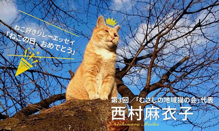 【ねこ好きリレーエッセイ】わたしの地域猫活動日記