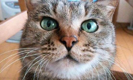 野良ネコから家族へ。12年もの時間を共有し、幸せな一生をまっとうした愛猫が、残してくれたもの。