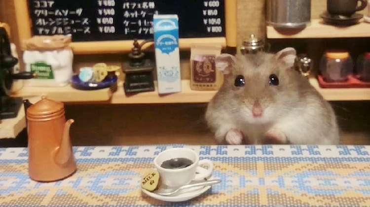 【ミニチュア喫茶♪】ハムスターが接客してくれる、ちょっとレトロな喫茶店が可愛かった(*´Д`)♡