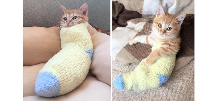 モコモコ靴下の中で、ぬくぬくする子猫。その姿があまりにも可愛いと話題に…♡(3枚)