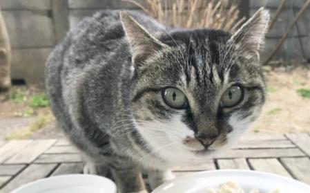 インスタで大人気の猫、チミママさん! 美味しいごはんを、アツく『食レポ』する姿が…(*´艸`*)