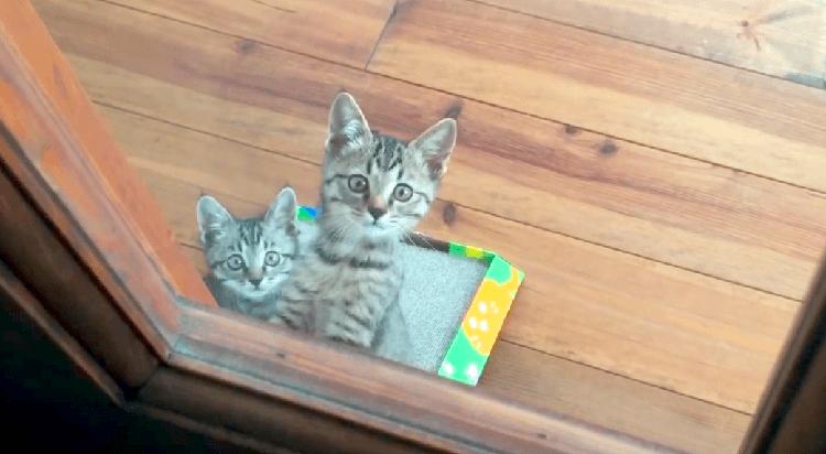 外出する飼い主さんを、見送る猫たちの視線が…。これじゃ、どこにも行けなくなる(;´Д`)