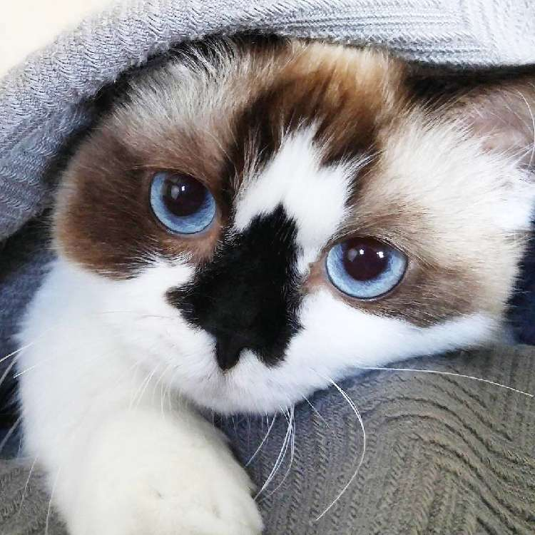 美しい瞳に、かわいいお鼻♡ 世界有数ロック&キュートなニャンコがすごかった…(・o・) 10枚