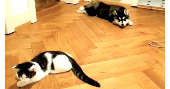 【遊んでほしいなぁ】どうしても猫さんと一緒に遊びたい子犬の、健気すぎる姿が…( ;∀;)♡