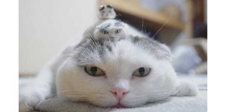 【かわいすぎる三兄弟!?】自分のミニチュアに出会った猫のライ君。微笑まずにはいられない写真11枚♡