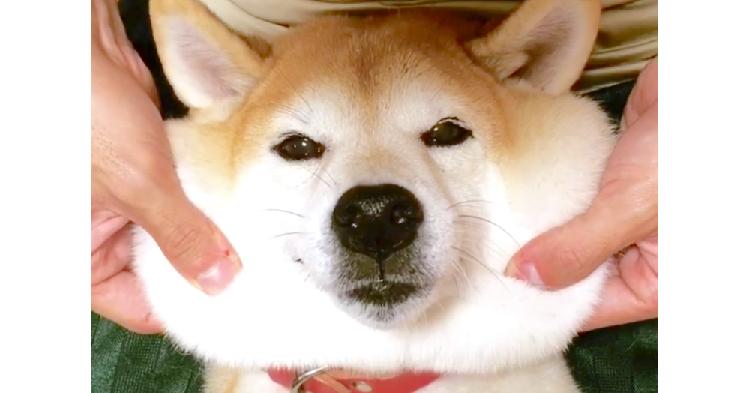 保護した愛犬が取り戻した表情、それは飼い主さんとの幸せな毎日が作った「やさしい笑顔」でした。