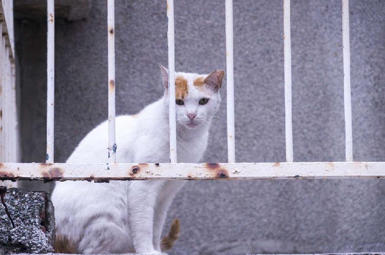 保健所から猫を迎えるには? 注意点を解説します