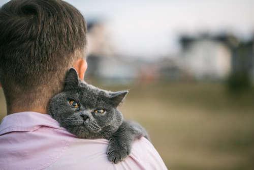 猫を家族に迎え入れたい! 神奈川の里親募集情報