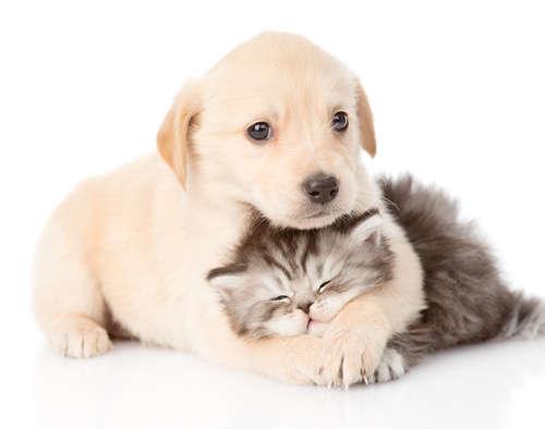 「私、博愛なんです。」生物種を超えて赤ちゃん犬をかわいがるネコ!