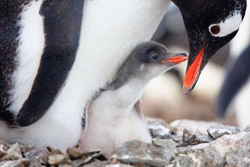 【子ども×おとな】動物の愛あふれる姿に心温まる画像集