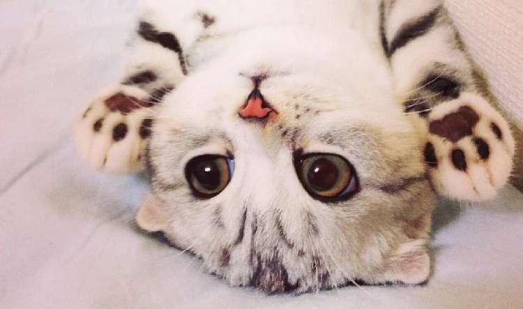 【愛嬌いっぱい♡】まんまるお目目のかわいい猫、ハナちゃんにキュンキュンが止まらない写真集(14枚)