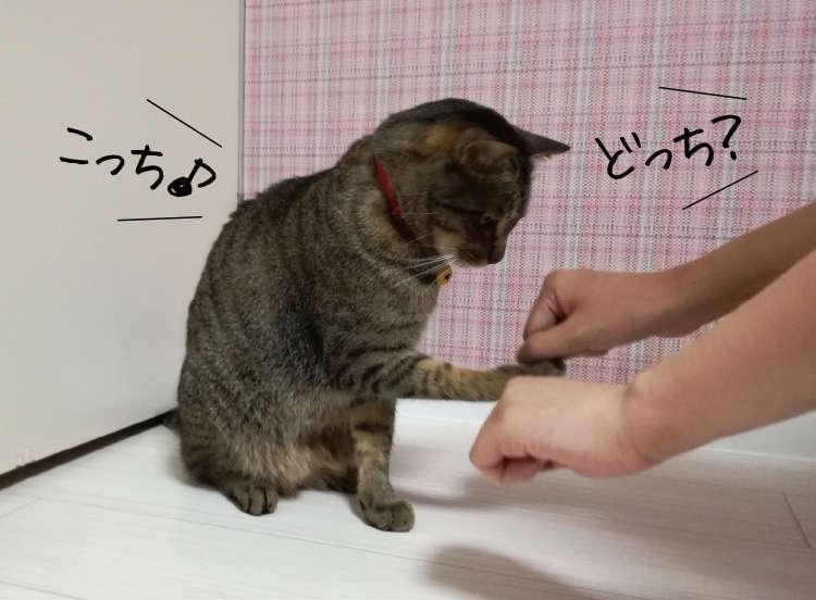 はるまき(♂4歳)