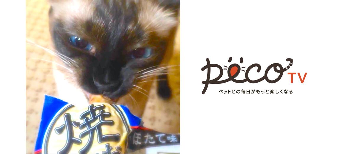 【動画投稿でCM出演♫】焼かつお・焼ささみを食べるモデル猫ちゃん大募集キャンペーン