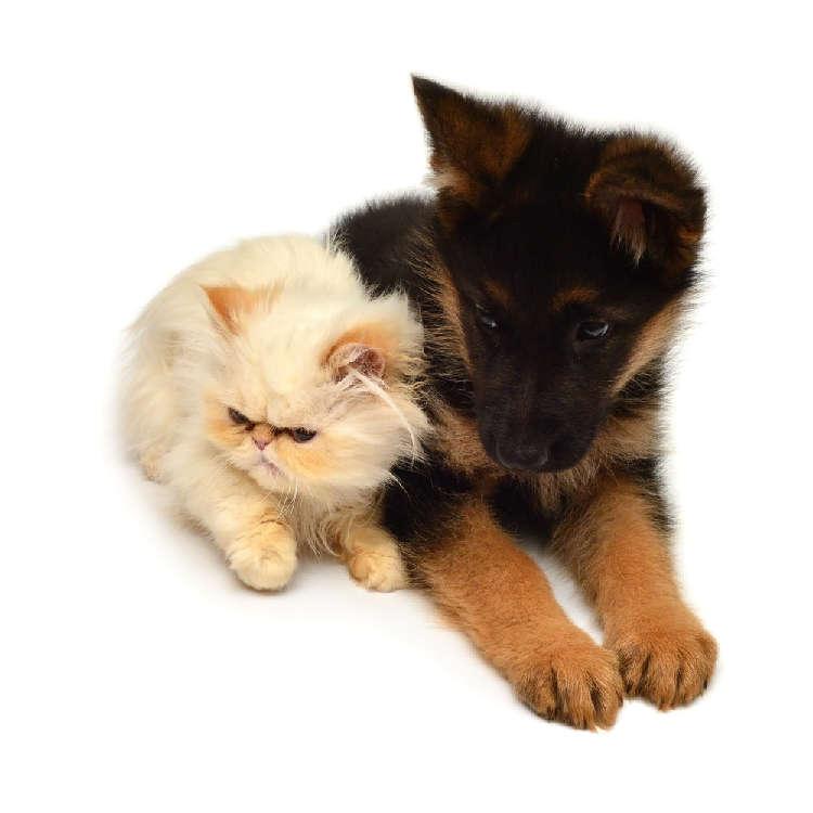 動物の保護施設、犬と猫のシェルターについて