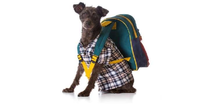 犬や飼い主さんへ送りたい。オススメプレゼント