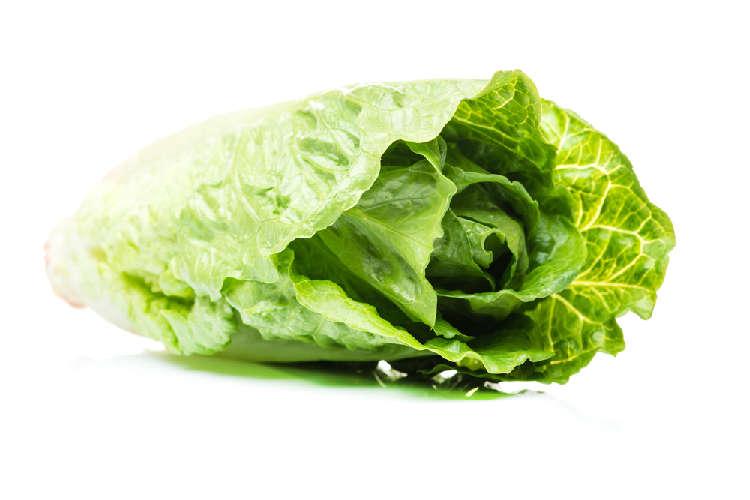 犬に白菜って食べさせてもいいの??