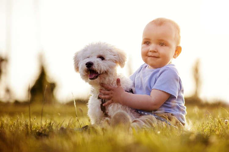 有名な詩「子供が生まれたら犬を飼いなさい」を証明する写真10選
