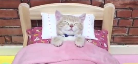 子猫ちゃんに、ふかふかのベッドを用意してあげたら → あまりにも可愛く使いこなしてくれた♡