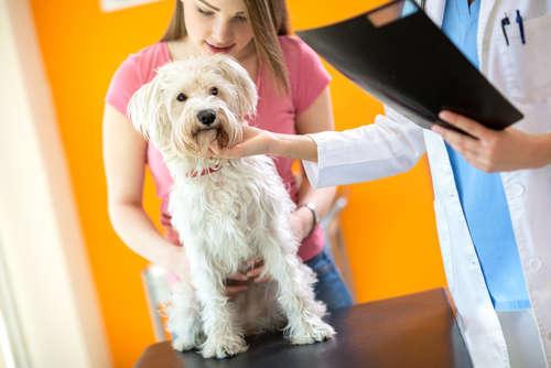 「ペット保険」はけっこう当たり前!?  世界のペット先進国事情に学ぶ飼い主のココロガマエ