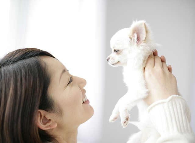 愛犬の腸内環境、気にしてる? 健康維持のために『jp STYLE』で腸内フローラを整えよう