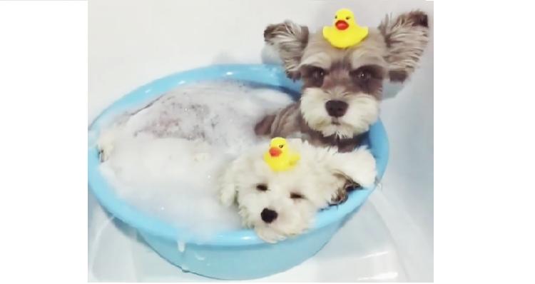 【見てる方の疲れも吹き飛ぶ♡】お風呂のよさに気付いてしまったワンコたちの姿が…可愛かった(*´Д`)