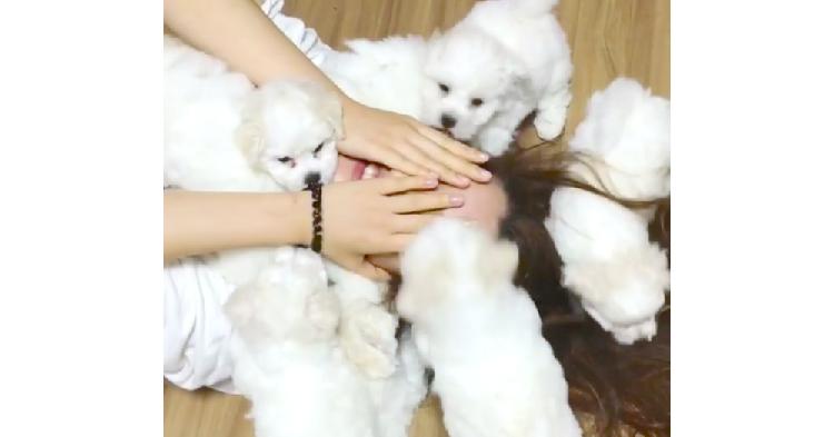 飼い主さん大丈夫…!? 7匹の子犬たちの「大好き攻撃♡」を全身で受け止めた結果(; ・`д・´)