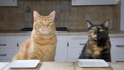 いつものフードにひと手間! 10分でアレンジできる猫ごはん&簡単おやつ