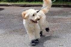 """ワンコの肉球を怪我から守る! 犬用の""""靴""""がおしゃれで可愛い♡【アンケート回答でプレゼントも♪】"""