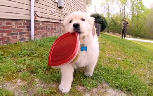 お手伝いを頼まれた子犬… 渡された「お弁当」を無事お家まで運ぶことが出来るのか!? しかし(笑)