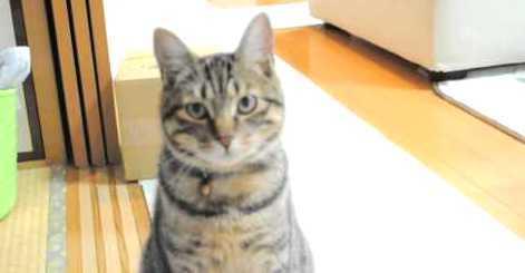 【お返事するニャ!】名前を呼ばれる度、かわいい声でお返事してくれる猫ちゃんが…(*´艸`*) 42秒