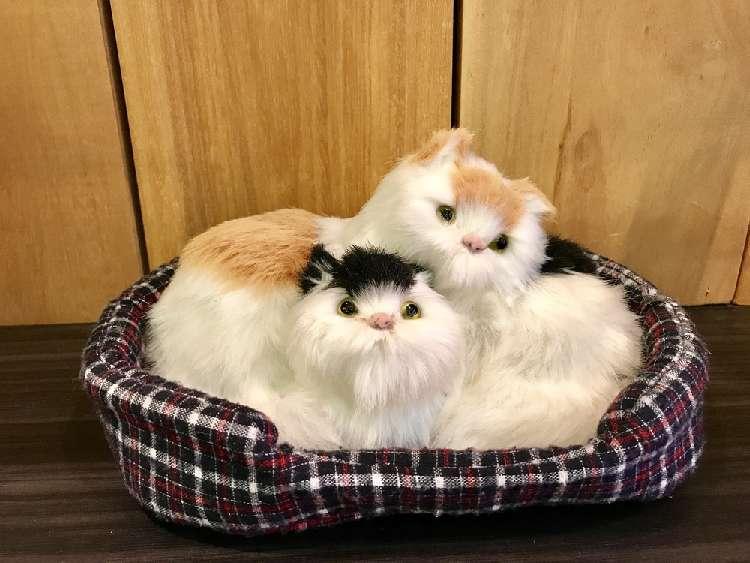 【本物の猫みたい!】猫ちゃんのキュートな動くぬいぐるみ特集