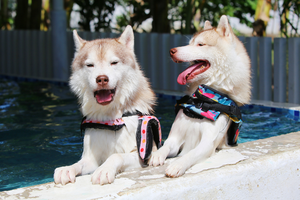 愛犬と夏を満喫しよう! 関東にある犬同伴OKのマリン&ウォータースポット