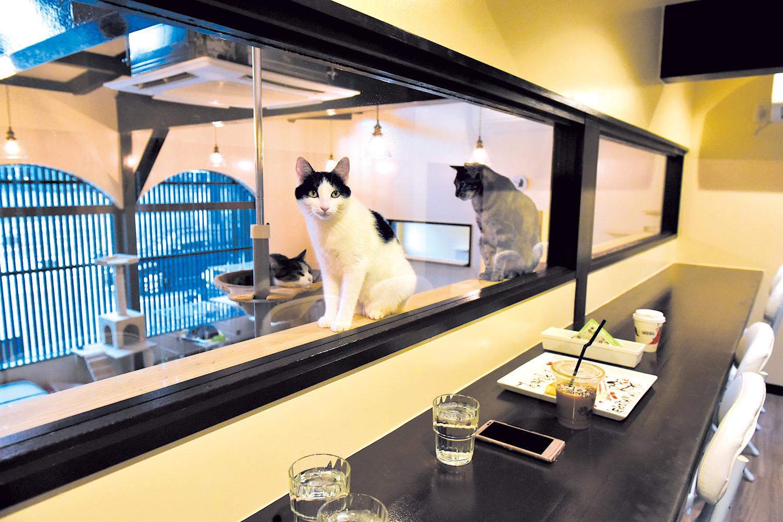中2階カウンター席で猫を眺めつつ食事。 飲み物類は猫部屋でもOK
