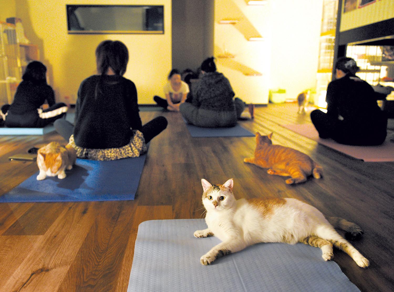月1回、午後7時半から開催される猫ヨガ教室