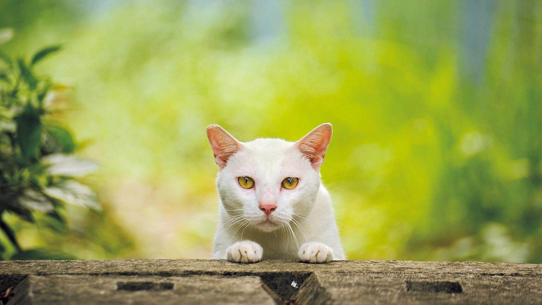 郊外では、緑豊かな環境で暮らす猫も多く見られる
