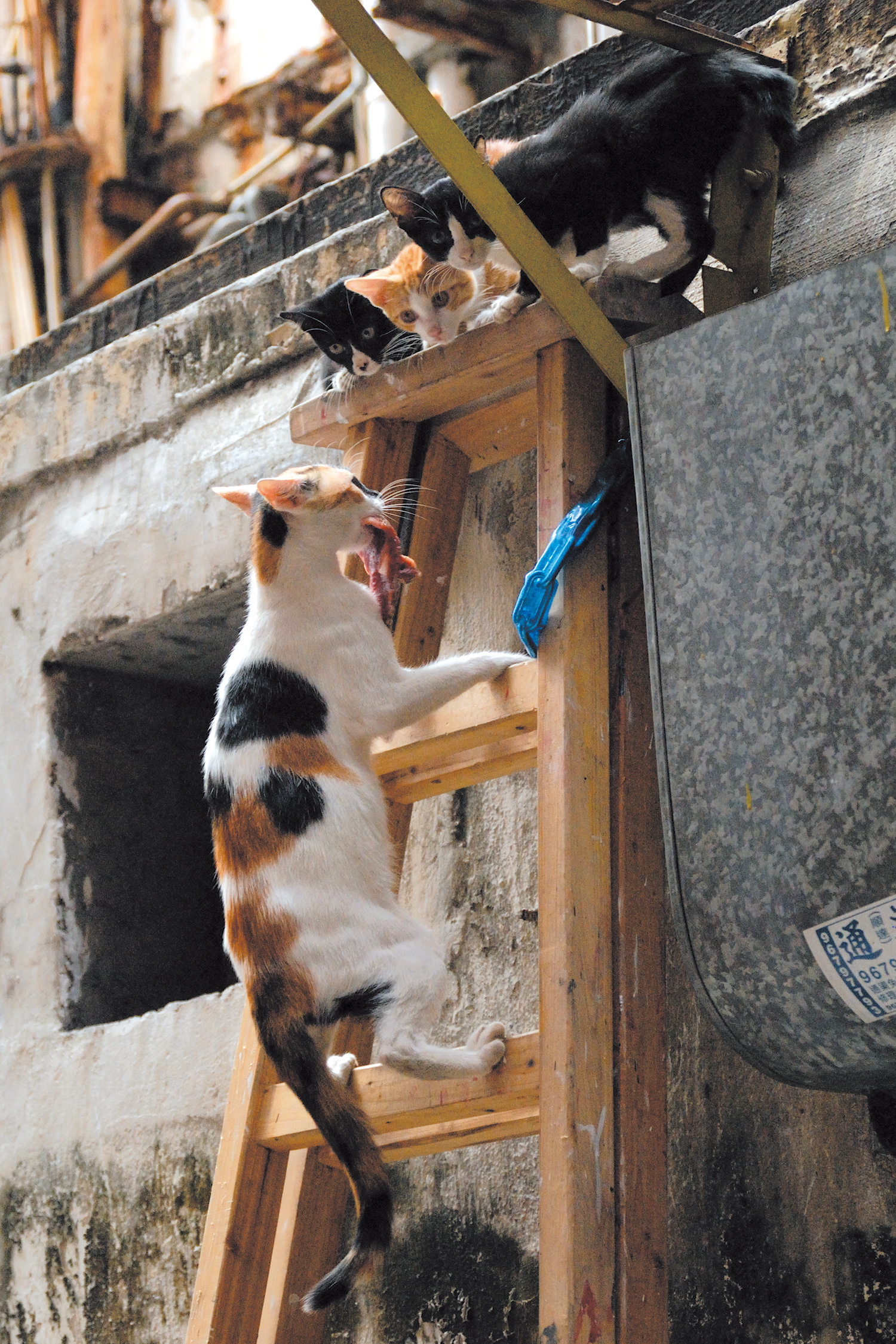 路地裏には、子猫たちが隠れるのに丁度いい場所が多い