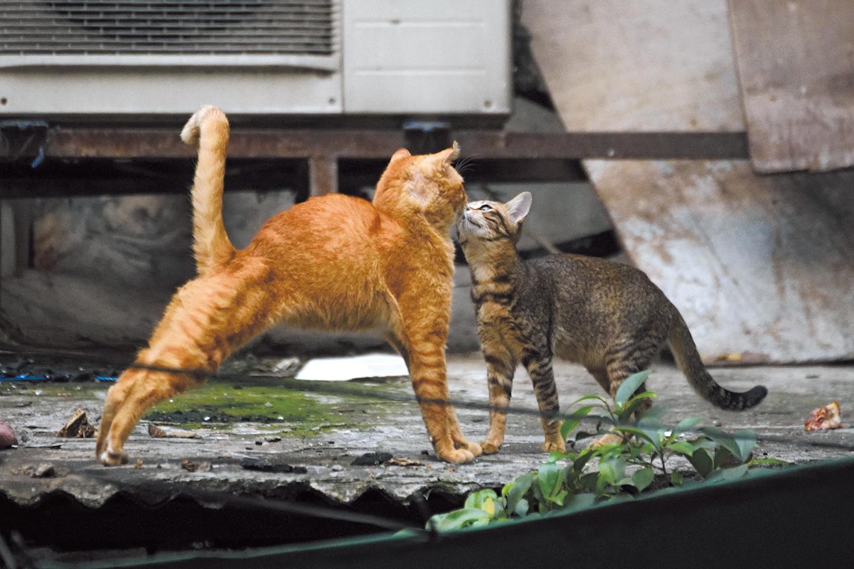 ボランティアの努力で街猫の数も少なくなってきている