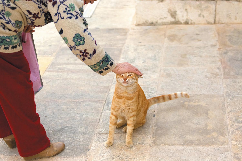 通りがかったおばさんに頭を撫でられて、嬉しそうなチャトラ君