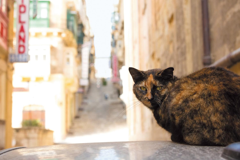 停車中の車の上にいた、大きなサビ猫さん。その先は長い階段が続きます