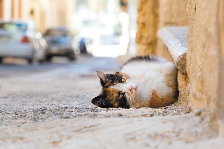 セングレアの路地で寝そべっていた、お茶目な三毛猫さん