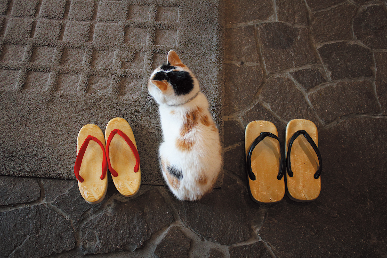 チェシャ猫ミー